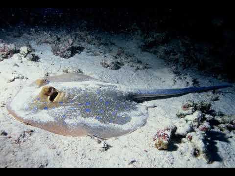 Demersal Fish | Wikipedia Audio Article