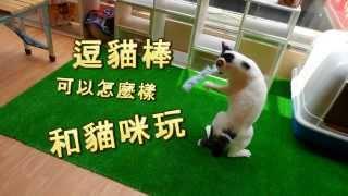 [橘圓貓] 第一次陪貓玩就上手,3分鐘變成逗貓大師!