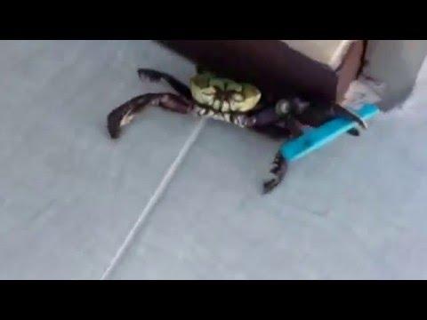Crabe Avec Un Couteau funny hitler crab with knife ; crabe avec un couteau - youtube
