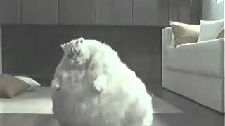 корочная реклама с котом