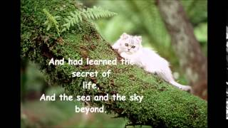 The Kinks - Phenomenal Cat (with lyrics )