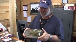 Colorado High: Buying Legal Marijuana