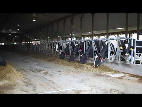 american dairy farms endless transformations of A non-profit organization established in 1974, gita nagari is home to the first and only certified slaughter-free dairy farm in north america the farm is currently operated by a diverse team of volunteers whose vision is to accelerate global transformation through compassionate living.