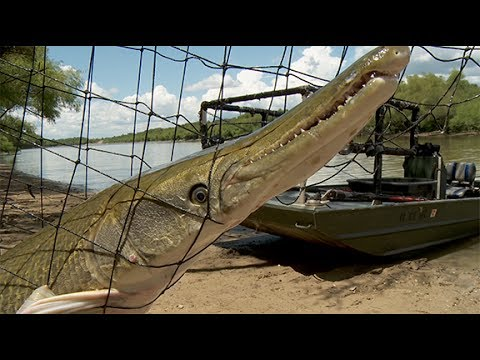 Arkansas Wildlife - S2.E8, Alligator Gar Research and Trout Fishing with U.S. Veterans