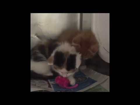 Give a kitten a toy!
