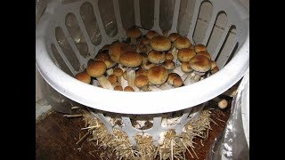 Как выращивать грибы в домашних условиях (Часть 1)