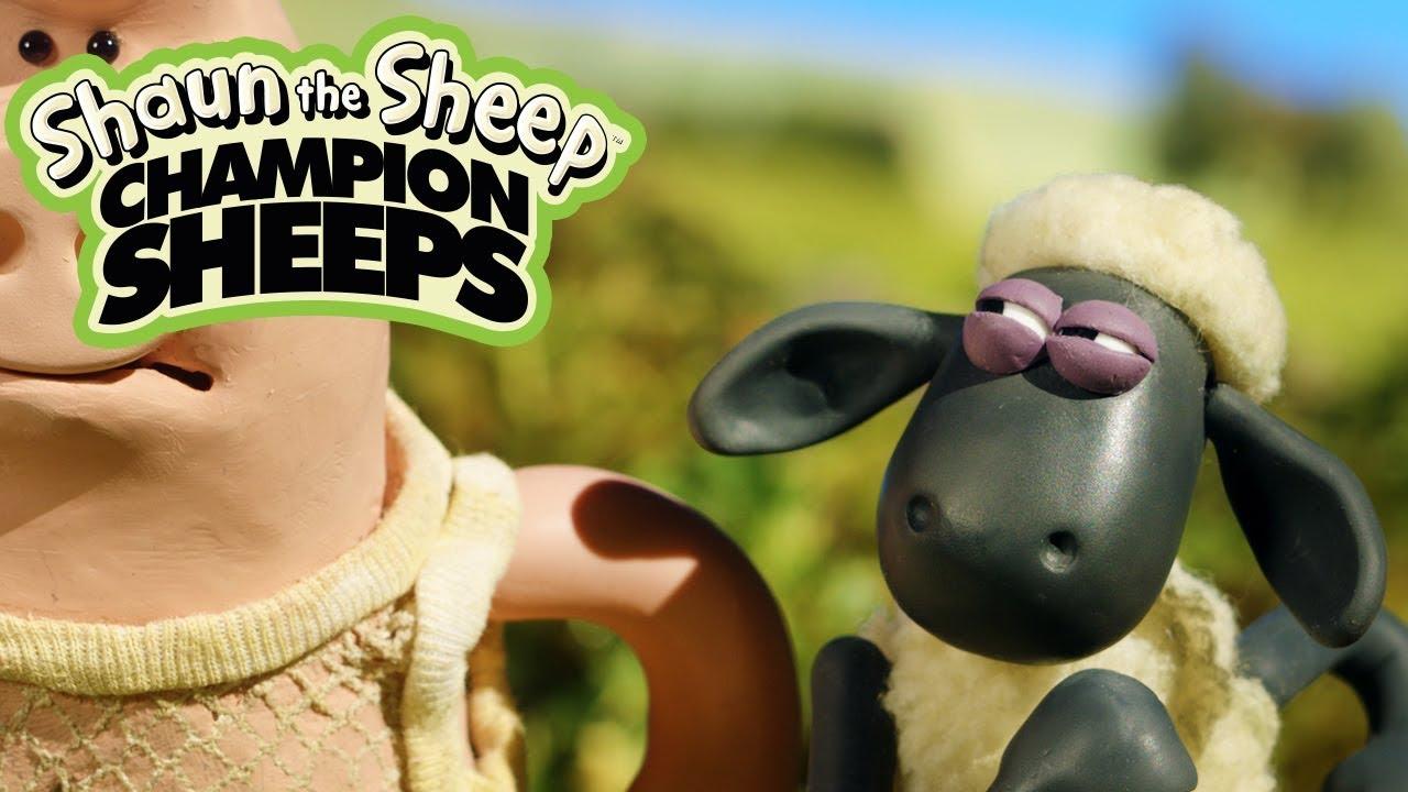 CHẠY 100m | Championsheeps | Những Chú Cừu Thông Minh [Shaun the Sheep]
