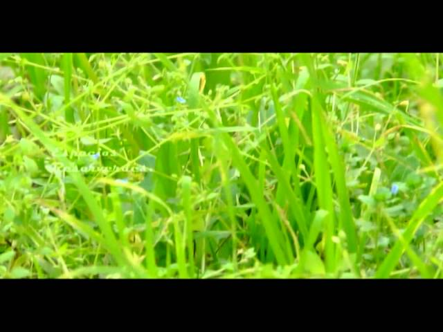 lisandro-aristimuno-the-heathen-bob-marley-cover-matyas-palavecino