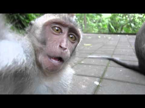 Sarcred Monkey Forest Ubud, Bali