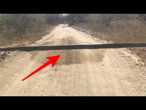 Image of Awalnya dikira Gundukan Polisi Tidur, Saat Di dekati Bersuara & Bergerak !! Ternyata itu..