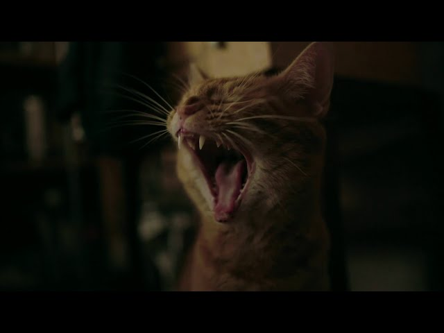 Bande annonce de Cat in the wall