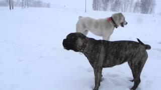 собака бывает кусачей))))))))