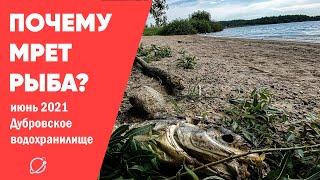 Что случилось с рыбой на Дубровском водохранилище
