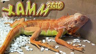 Террариумная выставка ХАММ 2019