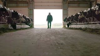 A Short Tribute To Wisconsin Dairy Farmers