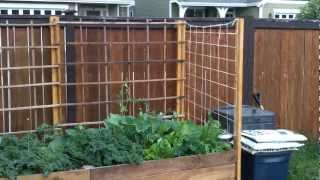 Growing Vertically Using A Simple And Easy Trellis
