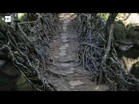 Cherrapunji (India): vivir bajo la lluvia