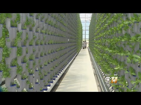 Growing It Faster, Getting It To Consumers Fresher