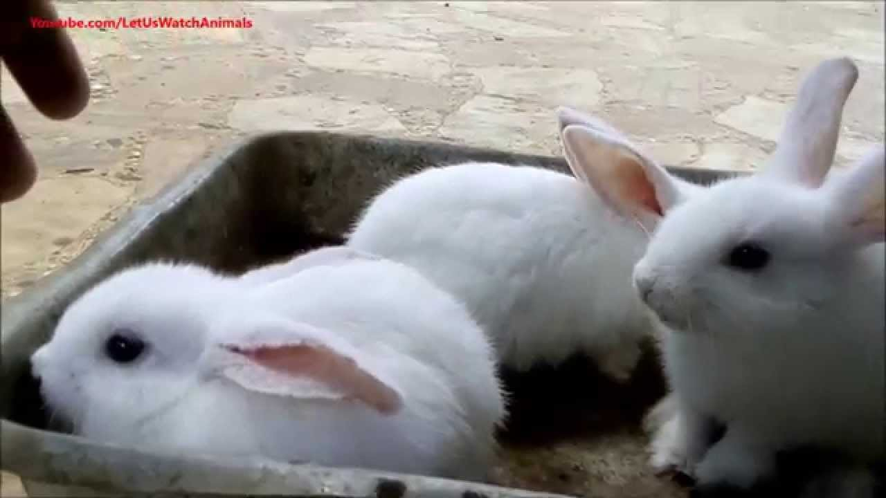 Cute White Bunny Rabbits |Awesome Baby White Bunnies