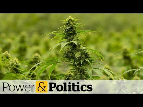 Cannabis Stocks Continue To Tumble | Power & Politics