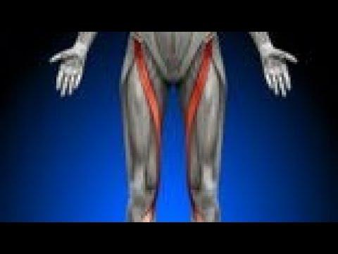 Origen, Inserción y Acción del músculo Sartorio - YouTube