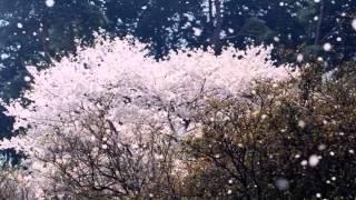 原田ゆかり - さだめ花