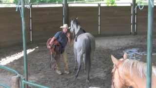 Saddling A Horse For The First Time with Daryl Gibb - Part 2