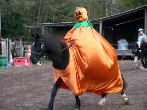mon cheval citrouille - YouTube