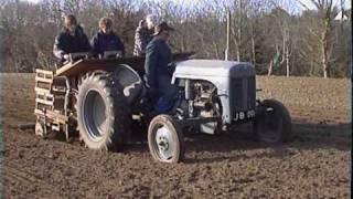 Planting jersey royal potatoes
