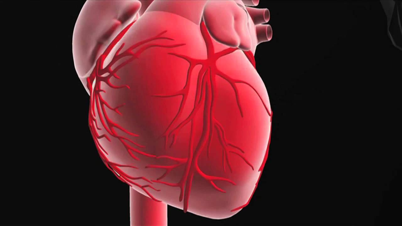 Molto Ruolo e funzione del cuore - YouTube ON12