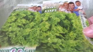 САЖАЕМ САЛАТ - АЗАРТ- НА ЗЕЛЕНЬ / СРЕДНЕСПЕЛЫЙ/