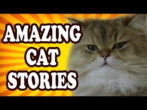 Top 10 Amazing Cat Stories