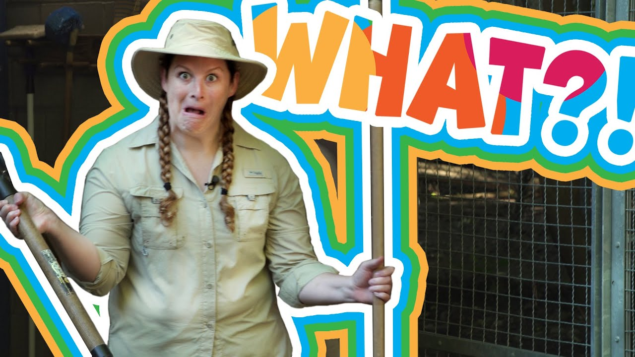 I Can Be What?! | Zookeeper | Part 1 |Lynx