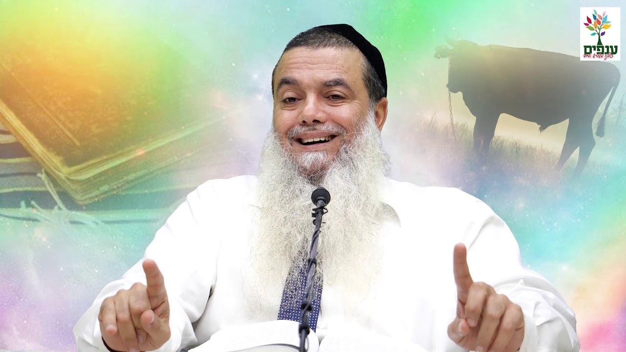 פרשת חוקת: יותר חכם מהבורא? - הרב יגאל כהן HD - קטע על אמונה תמימה!