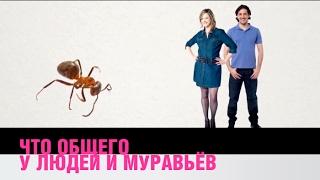Что общего у людей и муравьев