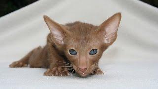 Красивые фото кошек. Разные породы кошек фото. Слайдшоу