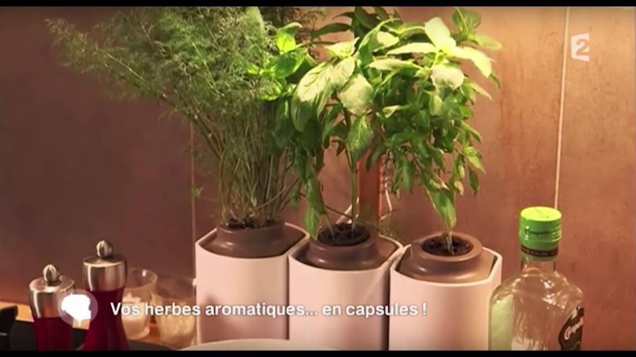Faire Pousser Du Persil En Appartement lilo, le potager d'intérieur autonome de prêt à pousser