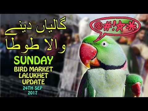 Birds for Sale in Karachi | Lalukhet Birds Market Weekly Update | Cursing Parrot | Video URDU/HINDI