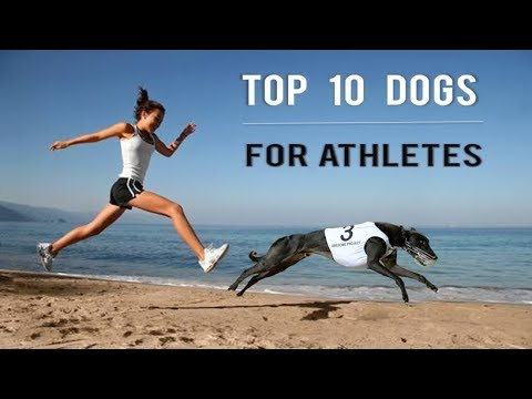 Top 10 dogs for athletes