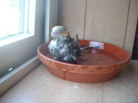 Matzes erstes Bad