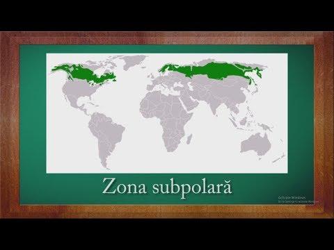 geografie:-biogeografia-zonelor-temperata-si-rece- -winschool