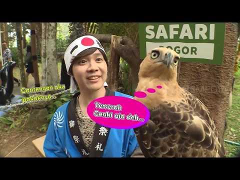 Genki Heboh Banget Main Ke Taman Safari | TAU GAK SIH (28/10/19)
