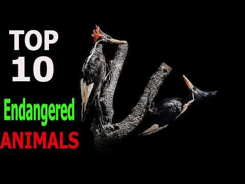 Top 10 Most Endangered Animals | Top 10 animals