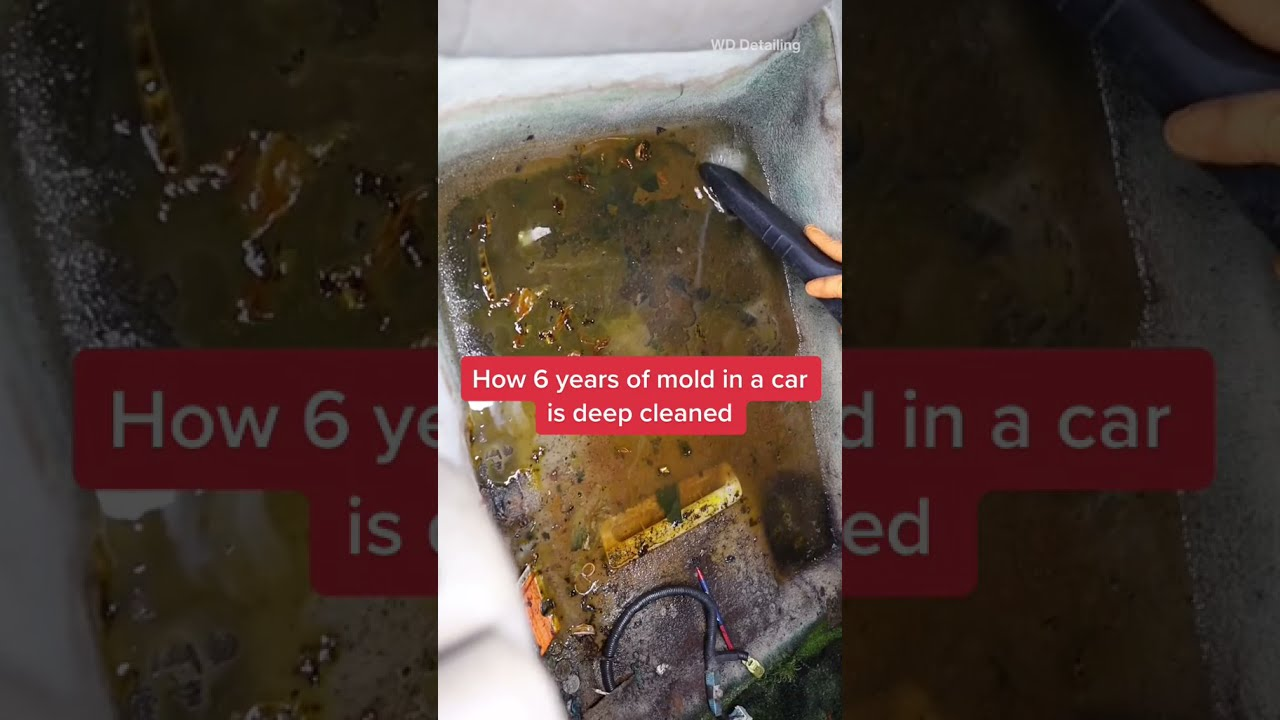 How A Moldy Car Is Cleaned