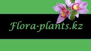 видео Интернет-магазин комнатных растений и цветов