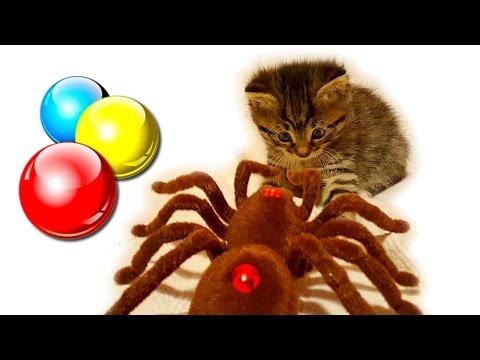 Гигантский паук напал на котенка! Маленький котенок играет с игрушками Смешной котенок❤Наши котята🎀