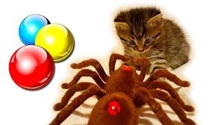 Маленький котенок играет с игрушками Смешной котенок❤Наши котята🎀