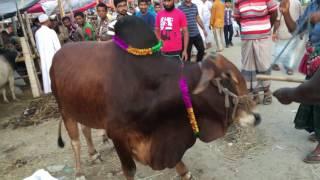 Beautiful Kurbanir Goru 2016