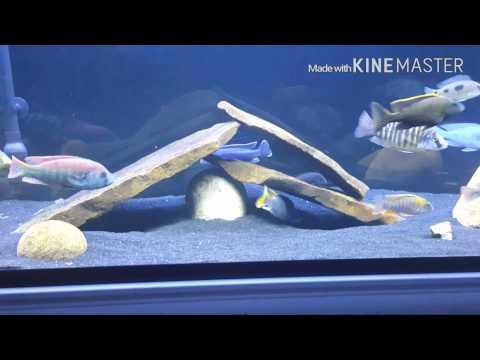 Aquarium start up costs