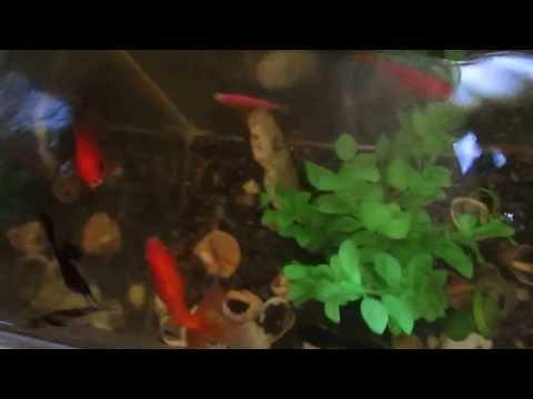 By zGaRBi (sayt clan su)chemi lamazi akvariumi